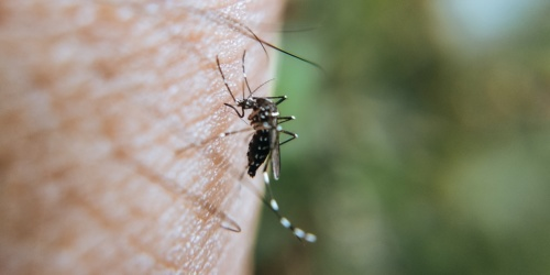 Virus Zapadnog Nila ponovo u Srbiji